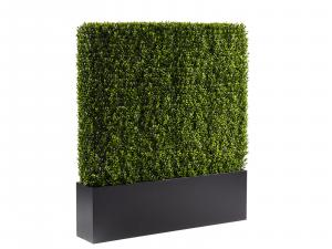 Boxwood Hedge, 4 ft. -- Trade Show Rental Furniture